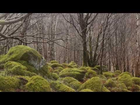 Северо-Шотландское нагорье