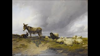 Parshat Bo: Donkeys & Sheep