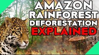 Amazon Rainforest Deforestation Explained