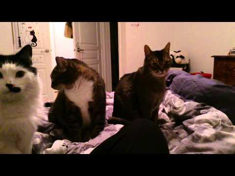 Un piccolo spuntino per i miei gatti!