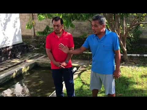 Pemantauan-Perkembangan--Bibit-Lele-tahun-2017-yang-diberikan-Desa-Canggu-Kepada-kelompok-ternak-Lele-Banjar-Padang-Tawang.html