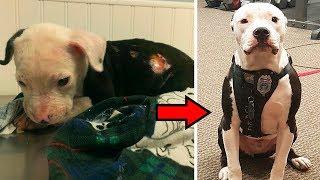 Спасённый от огня щенок стал настоящим пожарным