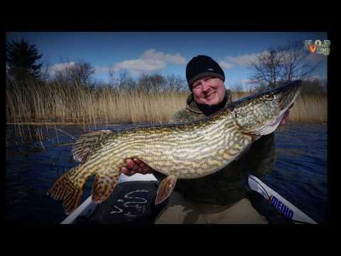 Geddefiskeri fra båd - 103 cm. lang gedde