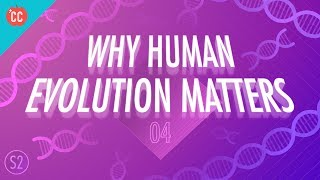 Why Human Evolution Matters: Crash Course Big History 204