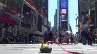 Parrots Sightseeing New York City (Video)