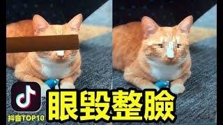 【抖音】一雙眼睛毀掉了整張臉  貓貓也是這樣的 美女挑戰 搞笑allinone