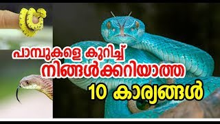 Top 10 facts about snakes | പാമ്പുകളെ കുറിച്ച് നിങ്ങള്ക്കറിയാത്ത 10 കാര്യങ്ങള്