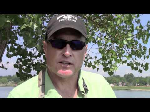 Tips og tricks til karpefiskeri med flue