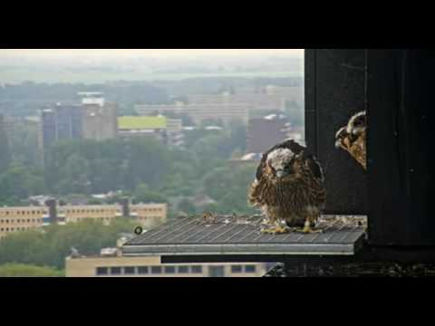 Nest 2: Fluttering on grid - 18.05.17
