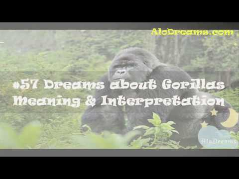 18 Dreams about Gorillas - Meaning And Interpretation