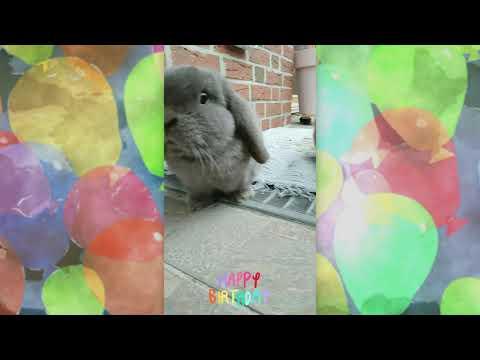 Geburtstagsglückwunschvideo für Große und Kleine
