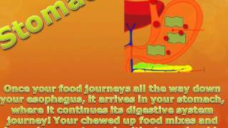 The Digestive System- A Digital Story For 5th Grade Science