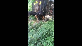 Animal Loves , Protective Dog