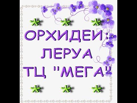 """Леруа:ЗАВОЗ чудесных ОРХИДЕЙ,ТЦ """"Мега"""",19.03.21,Самара."""