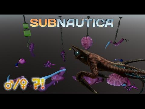 Sea Emperor gender confusion! | Subnautica News #56