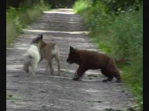 Onze honden in kennel van Tiroca