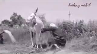 اغاني حصرية اللي مش عاجبه البلد اتفضل غور تحميل MP3