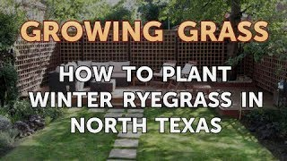 How to Plant Winter Ryegrass in North Texas