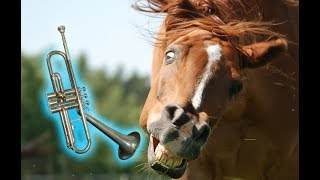How To Play The Perfect Horse Whinny | Trumpet Tutorials