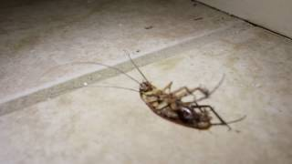 Water bugs vs Roaches and how to deal with them