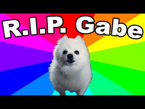 Gabe The Dog Died! REMEMBERING THE BORK KING (Thoughts And Tribute)