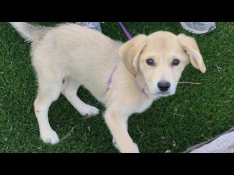 Dog Rescued 2 Weeks After She Got Loose Following Car Crash
