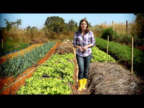 Agricultura Orgânica – Momento Ambiental