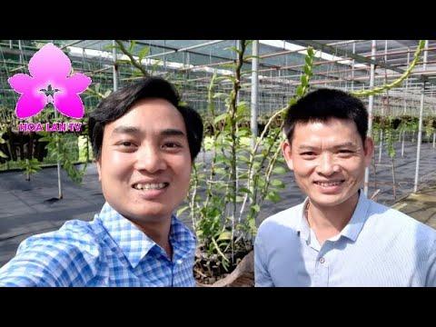 Anh Tạ Công Vũ Rút Ruột Chia Sẻ Kỹ Thuật Chăm Sóc Lan Cùng Anh Nguyễn Ngọc Hà | HOALANTV