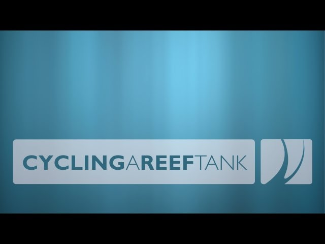 Cycling a Reef Tank