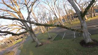 FPV parking lot freestyle - Out of my way, tree!