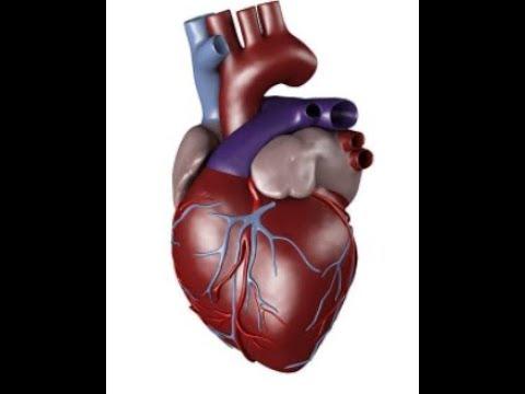 হার্টের ব্লক দূর করার ১০০% কার্যকরী পদ্ধতি. 100% effective way to remove heart block