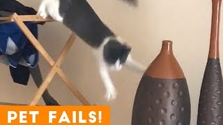 TRY NOT TO LAUGH FUNNIEST PET FAILS AUGUST 2018 | Funny Pet Videos