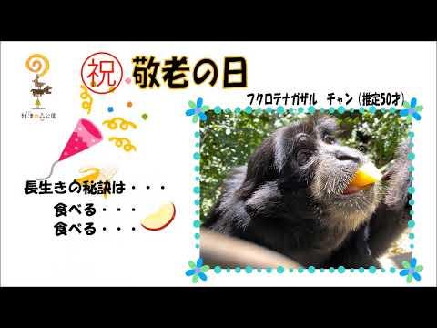 敬老の日/フクロテナガザルのチャン★到津の森公園