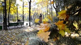 Bic Runga   Autumn Leaves