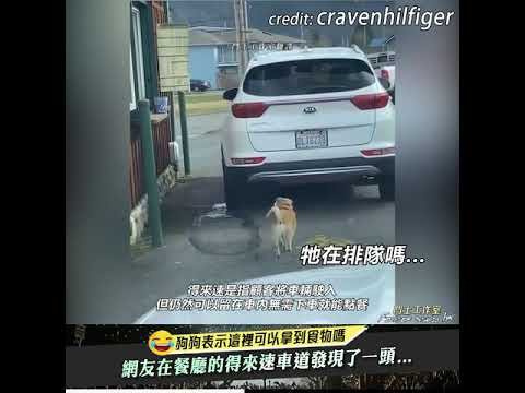 網友發現在得來速車道排隊的狗狗
