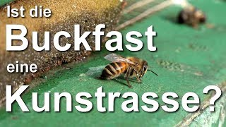 Ist die Buckfast-Biene eine Kunstrasse? | Kholo.pk