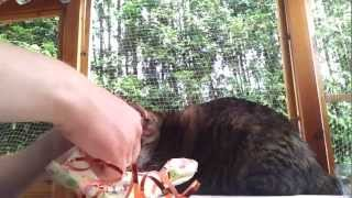 preview picture of video 'Our cat Lillo helps Dad wrapping a birthday present for Mom'