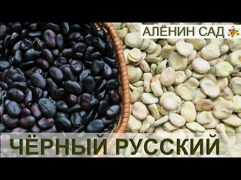 Русские бобы / Всё о выращивание бобов