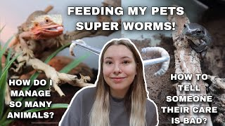 Feeding My Pets And Answering Your Questions!
