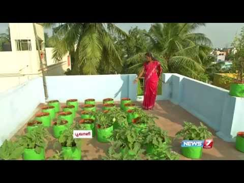 Download How to Grow Vegetables in a Container or Pots on the Terrace | Poovali | News7 Tamil