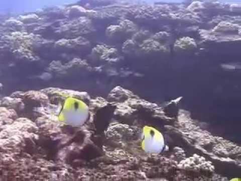 Rarotonga, Rarotonga,Cookinseln
