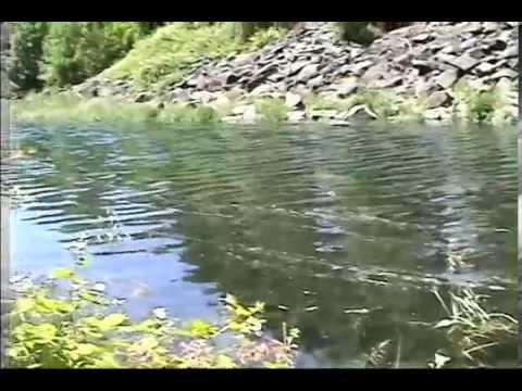 Bonneville Fish Hatchery - Naijafy