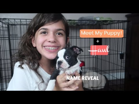 MEET MY PUPPY + PUPPY HAUL