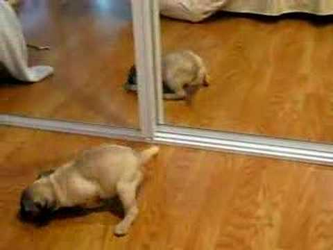 Pup Vs. Self - Hilarious and Adorable!