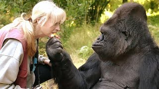 Koko, the gorilla that mastered sign language, died at 46