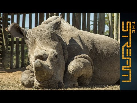 When should an endangered species be saved?
