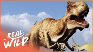 When Dinosaurs Ruled The Earth! | Wild Things Shorts