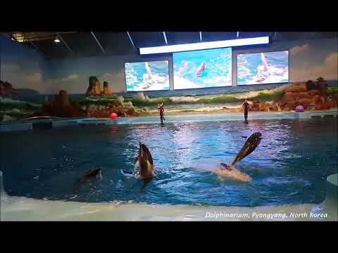 Dolphin show in the dolphinarium, Pyongyang, North Korea