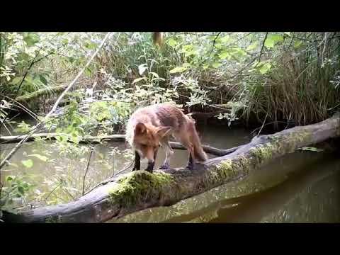 Жизнь одного упавшего дерева в лесу  Видео с фото ловушки  Франция