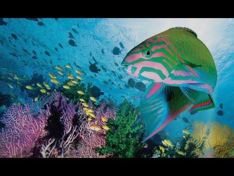 download lagu mp3 mp4 Coral Sea Dreaming Awaken, download lagu Coral Sea Dreaming Awaken gratis, unduh video klip Download Coral Sea Dreaming Awaken Mp3 dan Mp4 Unlimited Gratis